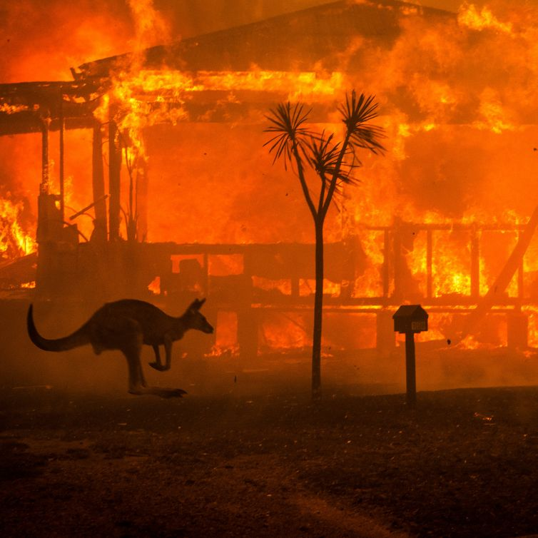 31ozf-fires-kangaroo-mobileMasterAt3x-v2